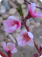 April in Utah 005