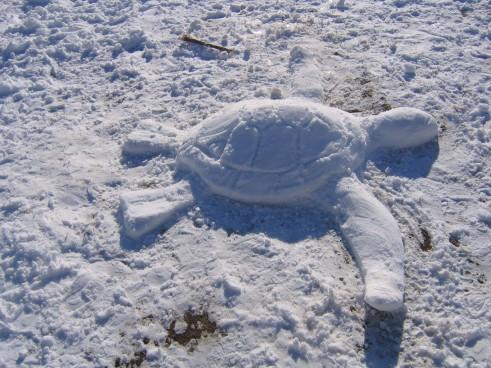snow turtle
