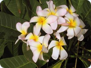 Hawaii_2 156