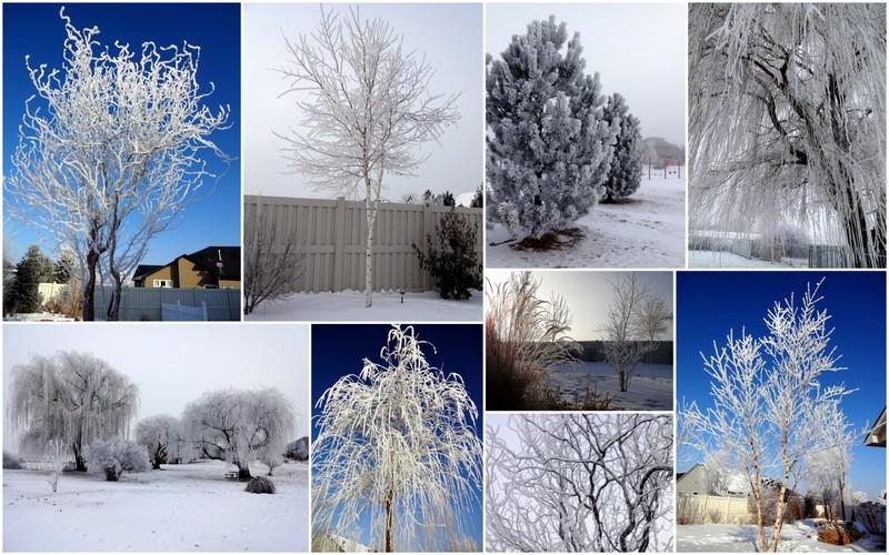 2013-01-20 2013 Jan Frost