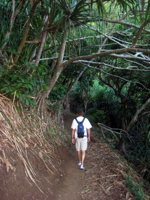 Dark jungle hikes