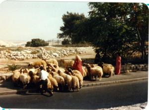 Israel 063
