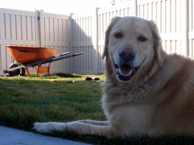 Ginger -- Garden Guru