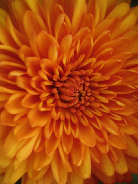 Velvety petals