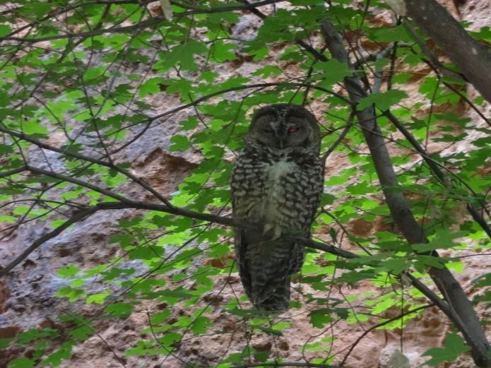 An owl!