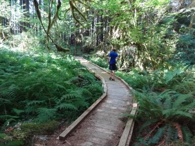 Boardwalk along hike