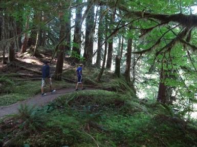 Trail at Ancient Groves near Sol Duc