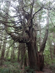 Another unique tree