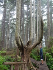Crazy-shaped trees