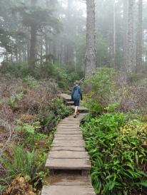 Boardwalk trails through swampy ferns