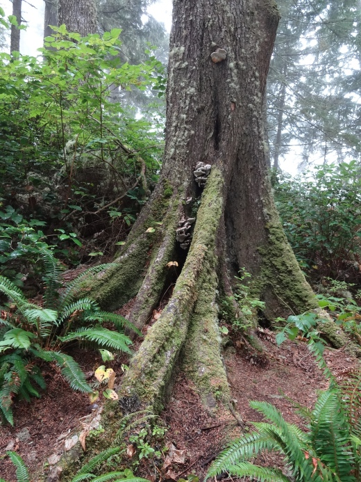 I love the roots in Washington forests