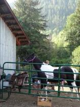 Preparing horses for riding