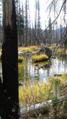 Near Loon Lake, Idaho