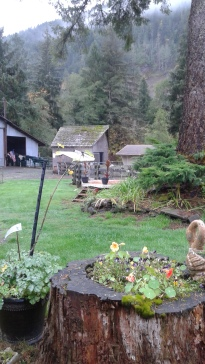 View of my brother's backyard from his kitchen