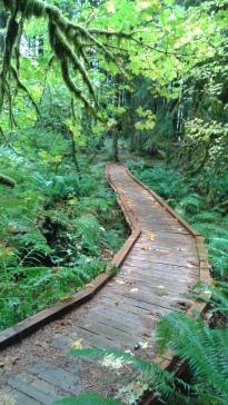 boardwalk through Ancient forest