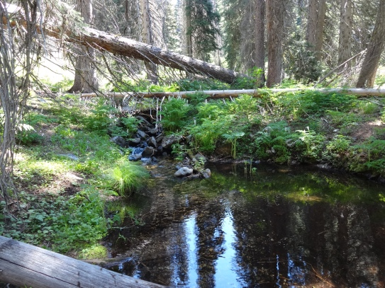 Trickling Creek we hiked along for miles
