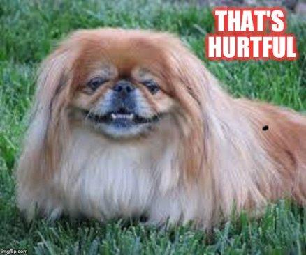 pekinese-thats-hurtful