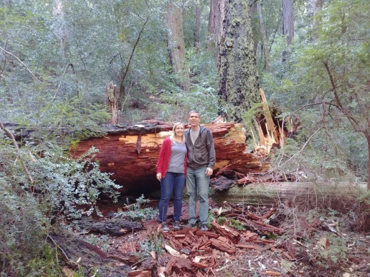 CA-redwood crash2